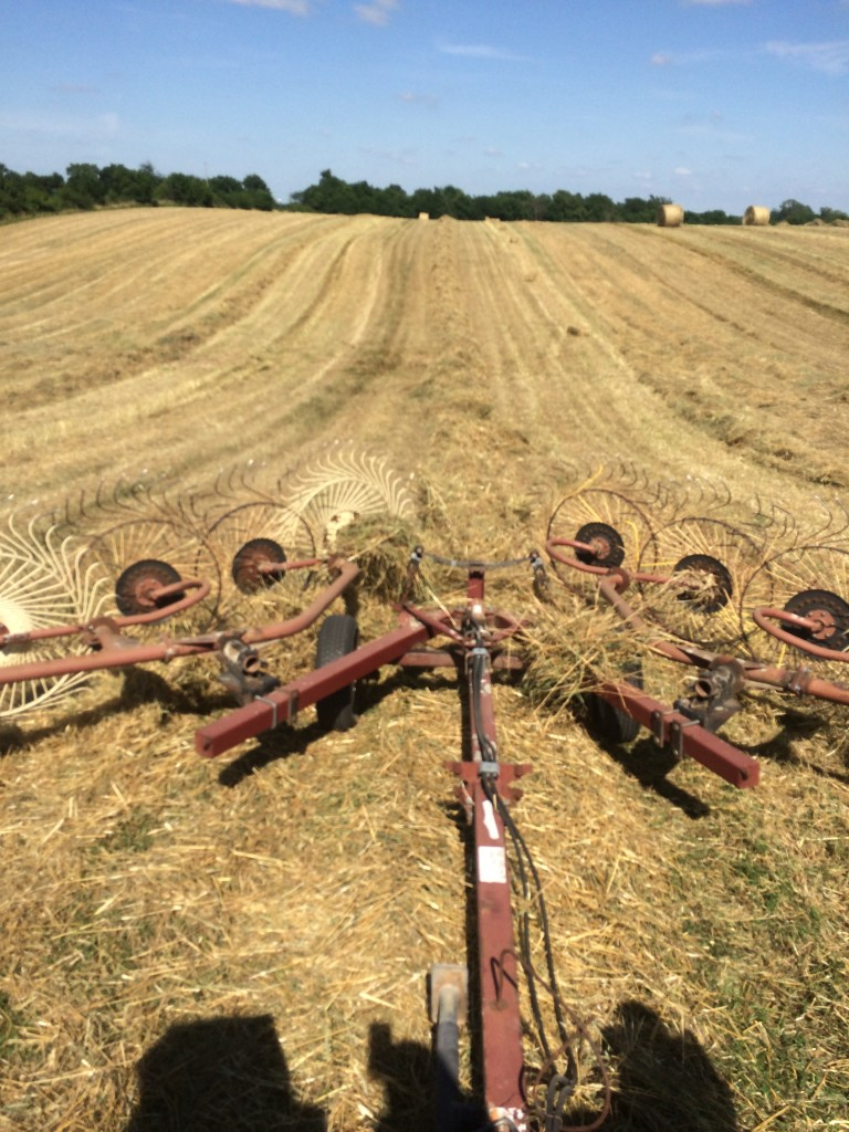 The next we raked it. The goal of raking is to windrow the hay or straw so that the baler can pick it up. This is looking back at the rake.