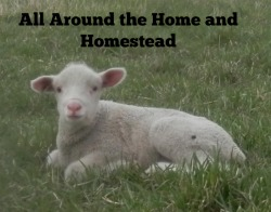 homeandhomestead