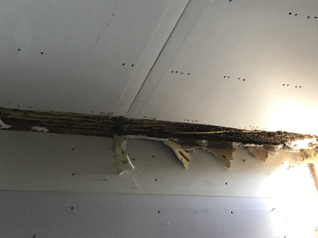 bee cutout in ceiling