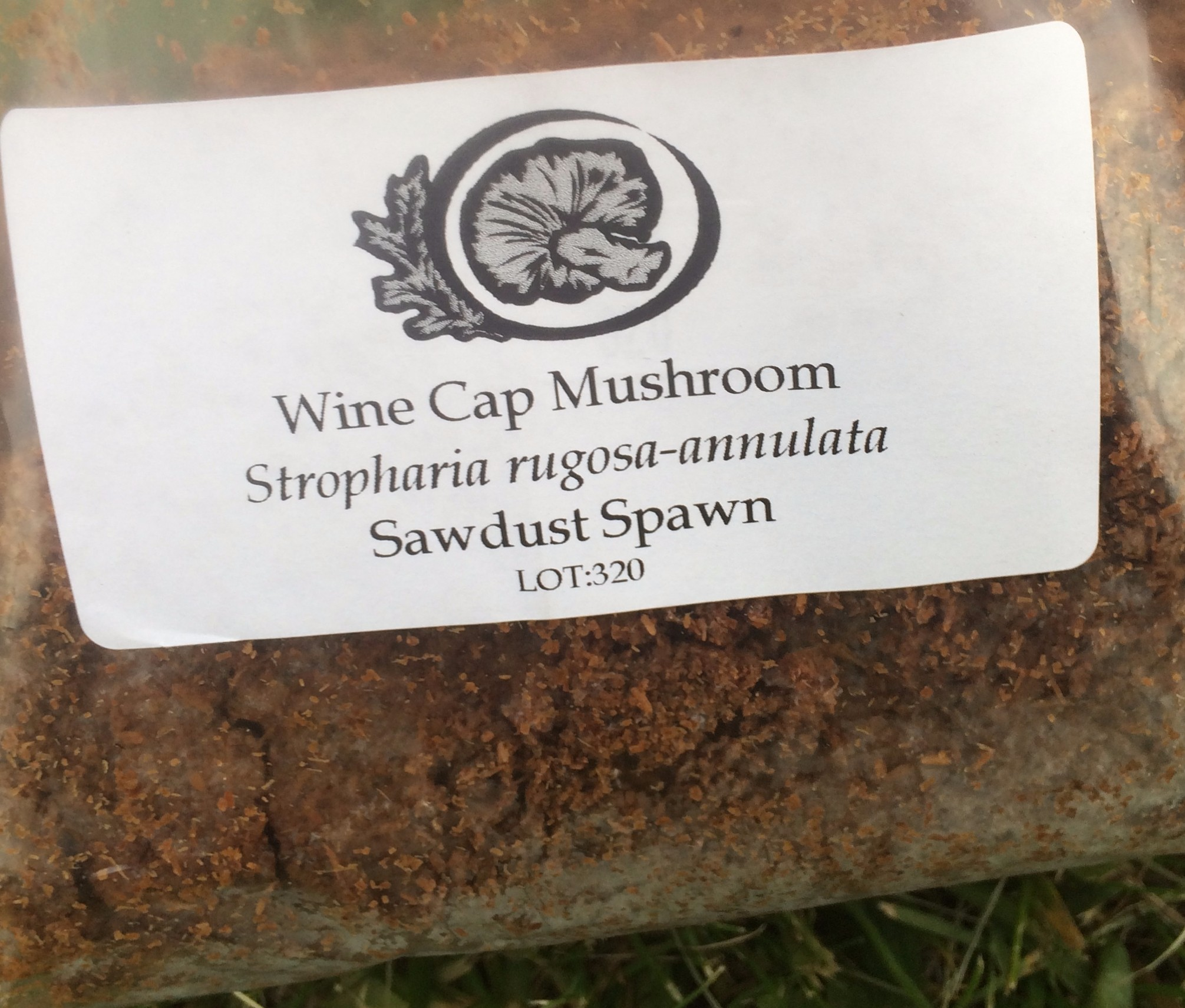 Our Farm: Wine Cap Mushrooms